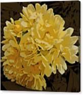Lady Banks Rose Cluster Canvas Print