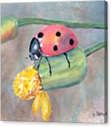 Lady Bug - Lady Bug... Canvas Print