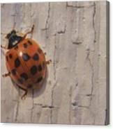 Lady Bug Canvas Print