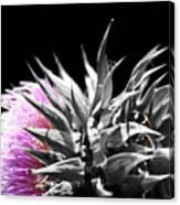 Lady Bug Thistle Canvas Print