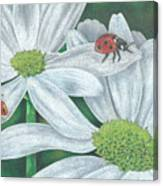 Lady Bugs Canvas Print