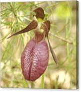 Lady Slipper Blossom Canvas Print