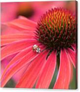Ladybird And Echinacea Canvas Print