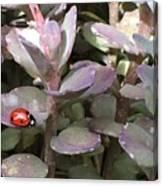 Ladybug Garden Canvas Print