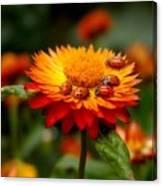 Ladybug Gathering Canvas Print