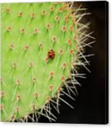 Ladybug On Cactus Canvas Print