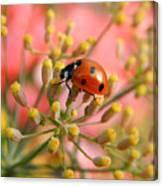 Ladybug On Fennel Canvas Print