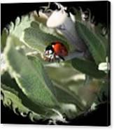 Ladybug On Sage With Swirly Framing Canvas Print