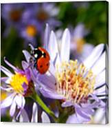 Ladybug Shows Her Heart Canvas Print