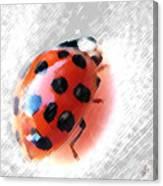Ladybug Spectacular Canvas Print