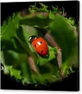 Ladybug With Swirly Framing Canvas Print
