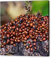 Ladybugs On Branch Canvas Print