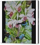 Laelia Purpurata Canvas Print