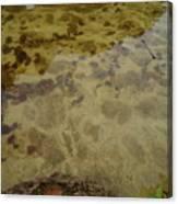 Lago Transparente Canvas Print