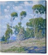 Laguna Trees Canvas Print
