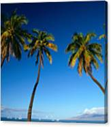 Lahaina, Five Coconut Tre Canvas Print