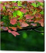 Laid Upon The Branches Canvas Print
