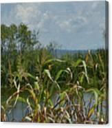 Lake Apopka Canvas Print