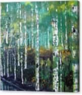 Lake Birch Canvas Print