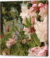 Lake Crescent Lodge Rhododendrons Canvas Print