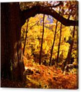 Lake District - Fall Colors Near Aira Force Canvas Print
