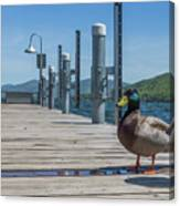 Lake George Duck Canvas Print