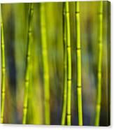 Lake Grass Canvas Print