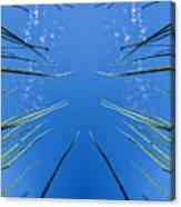 Lake Grass Reflection Canvas Print