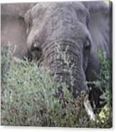 Lake Manyara Elephant Canvas Print