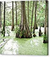 Lake Martin Swamp Canvas Print