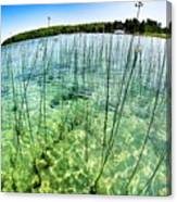 Lake Mindemoya Wading In The Reeds Canvas Print