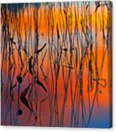 Lake Reeds And Sunset Colors Canvas Print
