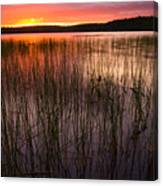 Lake Reeds At Sundown Canvas Print