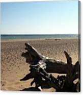 Lake Superior Driftwood Canvas Print