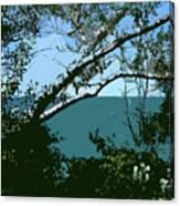 Lake Through The Trees Canvas Print