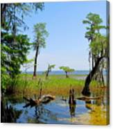 Lake Waccamaw Nc Canvas Print