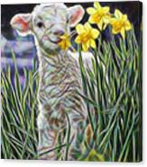 Lamb Collection Canvas Print