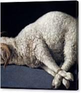 Lamb Of God. Agnus Dei Canvas Print