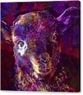 Lamb Spring Cute Animal  Canvas Print
