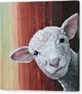 Lamb Canvas Print