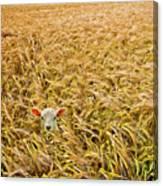 Lamb With Barley Canvas Print