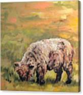 Lambkin Canvas Print