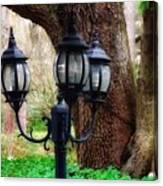 Lamppost And Oak Canvas Print