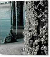 Land Meets Water Nature Photograph Canvas Print