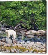 Land Of The Spirit Bear Canvas Print