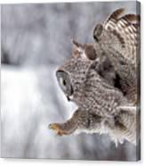 Landing Great Grey Owl Canvas Print