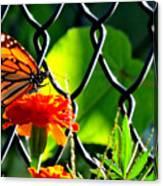 Landing On Marigold Canvas Print