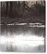 Landing Trumpeter Swans Canvas Print