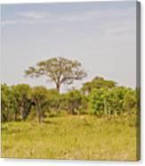 Landscape In Botswana Canvas Print