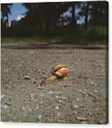Landscape Of The Snail Canvas Print